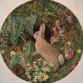 Rabbit Amid Ferns And Flowering by MotionAge Designs