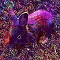 Rabbit Animal Baby Rabbit Bunny  by PixBreak Art