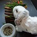 Rabbit by Daniela Buciu