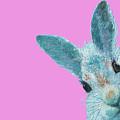 Rabbit Eyes by Jan Matson
