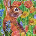Rabbit In Meadow by Olga Hamilton