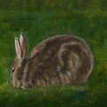 Rabbit In Spring by Julie Kreutzer