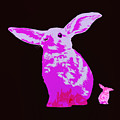 Rabbit by James Bethanis