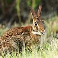 Rabbit Portrait by Charles McKelroy