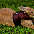 Rabbit With Vest by Doug Berry