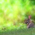 Rabbit Zen by Bill Wakeley