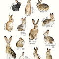 Rabbits and Hares by Amy Hamilton