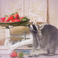 Raccoon And Strawberries by Tim Wemple