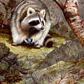 Raccoon Found Treasure  by Frank Wilson