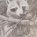 Raccoon by Harry Moulton