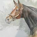 Race Horse Study 1 by Ramesh Mahalingam