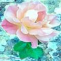 Rachael's Rose by Michelle Benjamin