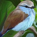 Racket-tailed Roller by Patricia Kemke
