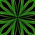 Radioactive Snowflake Green by Randolph Ping
