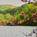 Radner Lake During The Spring by Stanton Tubb
