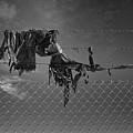 Ragged On A Fence by Dutch Bieber