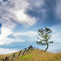 Rail Fence And A Tree by Philip Rispin