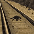 Railroad Bandit by DigiArt Diaries by Vicky B Fuller