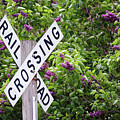 Railroad Crossing Sign With Lilac Blooms By Yearous by Kari Yearous