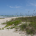 Railroad Vine And Sea Oats On The Atlantic In Florida by Allan  Hughes