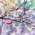 Rain Berries by Francesa Miller