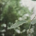 Rain Bokeh by Sally Banfill