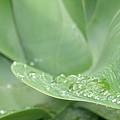 Rain Drop by Filomena Alcaide