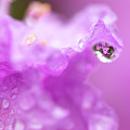 Rain Drop Refractions by Brian Hale