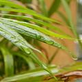 Rain Droppe1 by Rajesh R