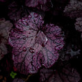 Rain Drops 23 Leaves by Robert Ullmann