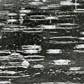 Rain Drops by Chris Delucchi