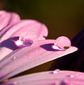 Rain Water On Daisy One by Brooke Roby