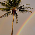 Rainbow And Palm Tree by Roger Mullenhour