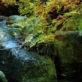 Rainbow Autumn Ferns At Pickle Creek 6303 H_3 by Steven Ward