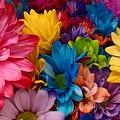 Rainbow Bouquet by Barbra Kotovich