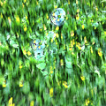 Rainbow Bubbles On The Grass by Nat Air Craft