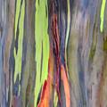 Rainbow Eucalyptus 13 by Dawn Eshelman