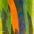 Rainbow Eucalyptus 5 by Susan Molnar