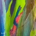 Rainbow Eucalyptus 7 by Susan Molnar