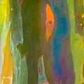 Rainbow Eucalyptus 9 by Susan Molnar