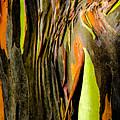 Rainbow Eucalyptus Bark by Alan Hart