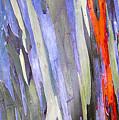 Rainbow Eucalyptus Tree by David Lee Thompson
