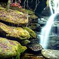 Rainbow Falls At Dismals Canyon by David Morefield