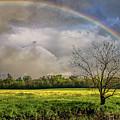 Rainbow Field by Martin Newman