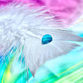 Rainbow Flight by Krissy Katsimbras