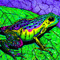 Rainbow Frog 2 by Nick Gustafson
