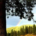 Rainbow In Pine Country by Will Borden