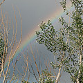 Rainbow In The Trees by Katherine Nutt