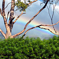 Rainbow In The Trees by Nicole I Hamilton
