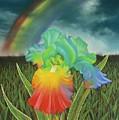 Rainbow Iris by Louise Green